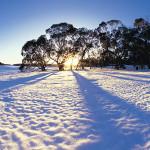 cafe-bus-snow