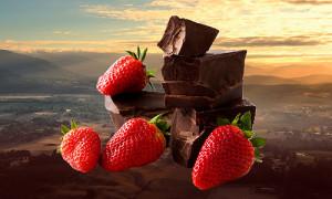 chocolate tour